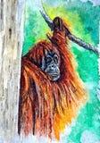 Orangutan - ` dziki manÂ' Malować mokrą akwarelę na papierze Naiwna sztuka sztuka abstrakcyjna Rysunkowa akwarela na papierze royalty ilustracja