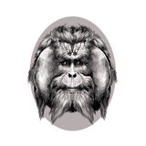Orangutan. Head hairy orangutan symmetry, graphics sketch vector black and white pattern on a brown background beige oval circle Stock Photos