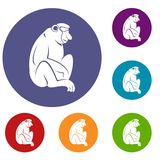 Orangutan icons set. In flat circle red, blue and green color for web Royalty Free Stock Photos