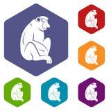 Orangutan icons set hexagon Royalty Free Stock Photos