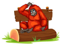Orangutan royalty free illustration
