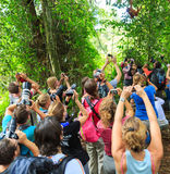 Orangutan madness. A big crowd of tourists with camera`s is trying to capture a young baby Orangutan in the rainforest jungle of bukit lawang on the island