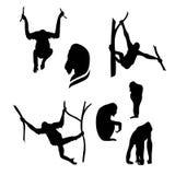 Orangutan monkey vector silhouettes. Orangutan monkey vector icons and silhouettes. Set of illustrations in different poses Stock Images