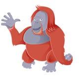 Orangutan Stock Photos