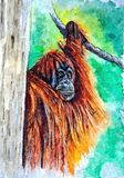 Orangutan - `the wild man». Painting wet watercolor on paper. Naive art. Abstract art. Drawing watercolor on paper. royalty free illustration