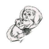 Orangutans, πίθηκοι - μητέρα και cub Στοκ Φωτογραφίες
