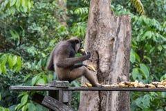 Orangutans. Orangutan in rain forest / indonesia Stock Photo