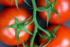 Oranic-Tomaten Stockbild