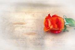 Oranje één nam op een houten achtergrond toe Stock Foto