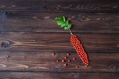 Oranje ashberry of lijsterbes als wortelvorm bij de houten lijst Royalty-vrije Stock Foto