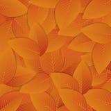 Oranje Autumn Leafs Vector illustratieachtergrond Royalty-vrije Stock Foto