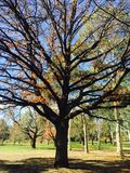Oranje Autumn Trees in park Royalty-vrije Stock Foto