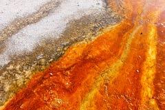 Oranje bacteriën Stock Afbeelding