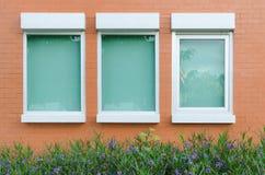 Oranje bakstenen muur met vensters weinig installatie en bloem Stock Foto's