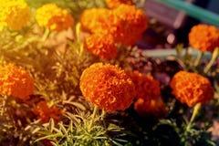 Oranje Ballen royalty-vrije stock afbeelding