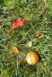 Oranje basketbal op groen gras Royalty-vrije Stock Afbeelding