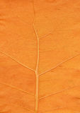 Oranje blad dichte omhooggaand Stock Afbeeldingen