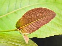 Oranje blad op groene bladachtergrond Royalty-vrije Stock Foto