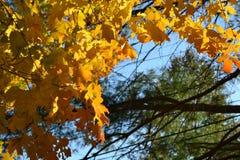 Oranje bladeren in de zon stock afbeelding