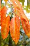 Oranje bladeren met waterdalingen Royalty-vrije Stock Foto