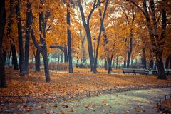 Oranje bladeren op bomen, de herfstpark, de herfstlandschap stock foto's