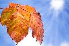 Oranje bladeren over blauwe hemel royalty-vrije stock foto