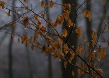 Oranje bladeren tegen de donkere boomboomstammen Royalty-vrije Stock Afbeelding