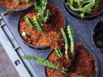 Oranje bloeiende cactus stock fotografie