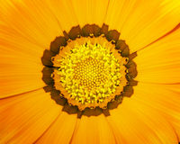 Oranje bloem 01 Stock Afbeelding