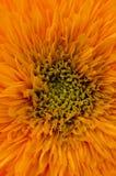 Oranje Bloem Royalty-vrije Stock Foto's