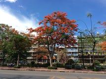 Oranje bloem en blauwe hemel Stock Foto