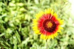Oranje bloem op een groene achtergrond stock foto's