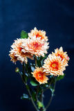 Oranje bloem op zwarte achtergrond Stock Afbeeldingen
