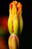 Oranje bloem over vage achtergrond Royalty-vrije Stock Afbeelding