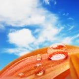 Oranje bloembloemblaadjes met waterdalingen op het Royalty-vrije Stock Foto