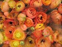 Oranje bloemboeket stock afbeeldingen