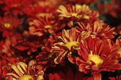 Oranje bloemclose-up op het gebied in tegenstelling stock fotografie