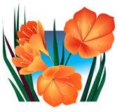 Oranje bloemen royalty-vrije illustratie