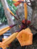 Oranje bloemen Royalty-vrije Stock Foto's