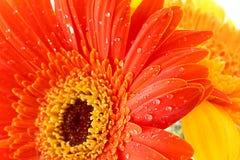 Oranje bloemen royalty-vrije stock afbeeldingen