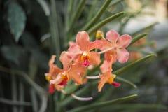 Oranje bloemen Stock Afbeelding
