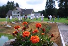Oranje bloemen bij landclub Royalty-vrije Stock Afbeelding