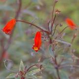 Oranje bloemen, boeket van gerber Royalty-vrije Stock Afbeeldingen
