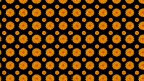 Oranje bloemen op zwarte Stock Afbeelding
