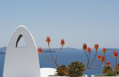 Oranje bloemen, Santorini, Griekenland Stock Afbeelding