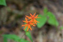 Oranje bloemen tegen het gras in zachte nadruk stock afbeelding