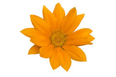 Oranje bloemhoofd royalty-vrije stock foto's