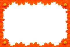 Oranje Bloemkader op Witte achtergrond royalty-vrije stock foto's