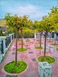 Oranje bomen in de stad van Athene, is er elke regen waar in de vloer royalty-vrije stock fotografie