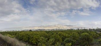 Oranje bomenaanplanting met rijpe vruchten in de vallei van Jordanië Royalty-vrije Stock Foto